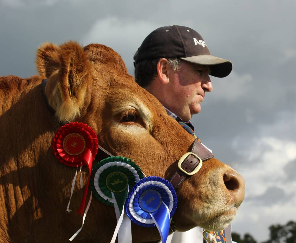 A farmer and his competition winning cow. © Usk Show.