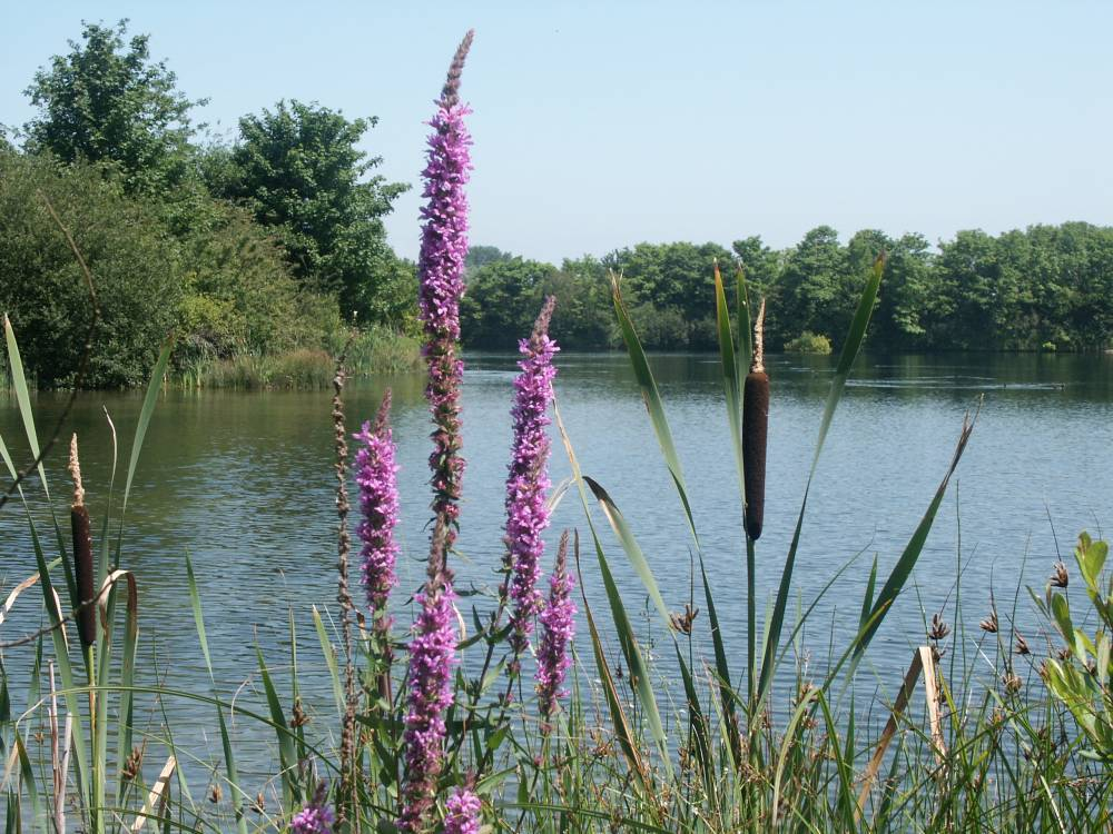 A view over the west lake at Cosmeston Country Park. © Vale of Glamorgan Council